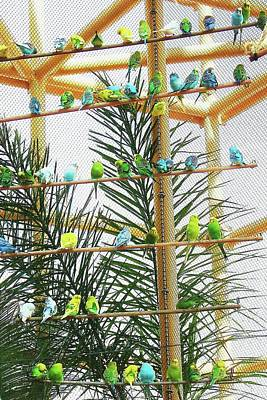 Digital Art - More Than A Pair-o-keets by Ellen Barron O'Reilly