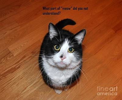 Photograph - More Words From  Teddy The Ninja Cat by Reb Frost