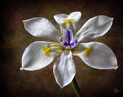 Photograph - Morea Lily 2 by Endre Balogh