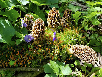Photograph - Morel Jackpot by Brook Burling