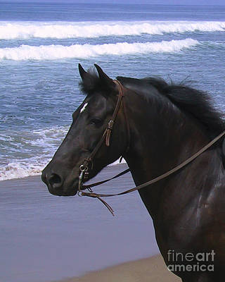 Morgan Head Horse On Beach Art Print