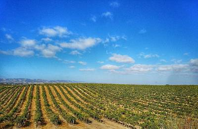 Photograph - Morgan Hill Vinyard by Mary Capriole