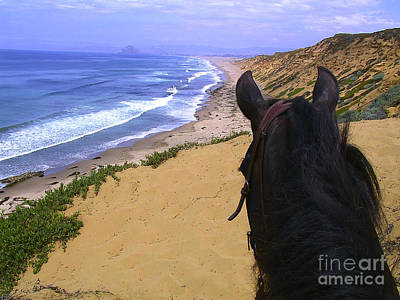 Photograph - Morgan Horse On Beach Bluff by Waterdancer