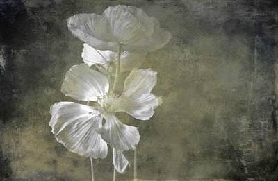 Moring Blooms Art Print