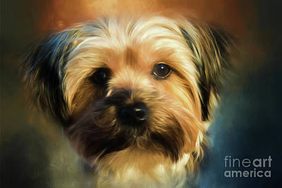Photograph - Morkie Portrait by Eleanor Abramson