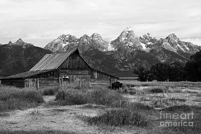 Mormon Row Famous Barn Art Print by Teresa Zieba