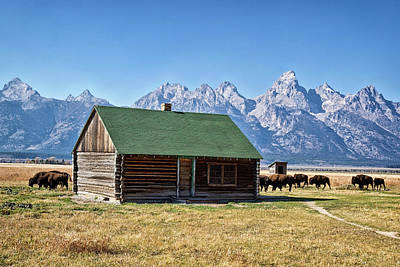 Photograph - Mormons Row Cabin by Shirley Mitchell