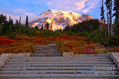 Photograph - Mornign Light On Mt. Rainier by Adam Jewell
