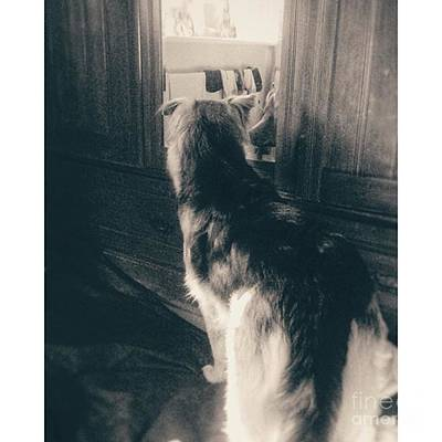 Gsd Photograph - Morning Ablutions. #petsagram #gsd by Isabella F Abbie Shores