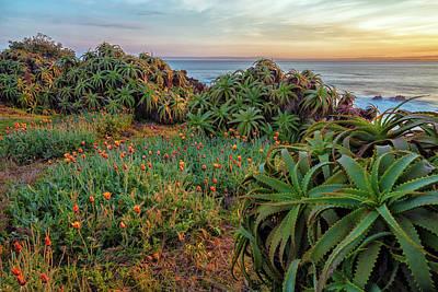 Photograph - Morning Along The Peninsula by Jonathan Nguyen