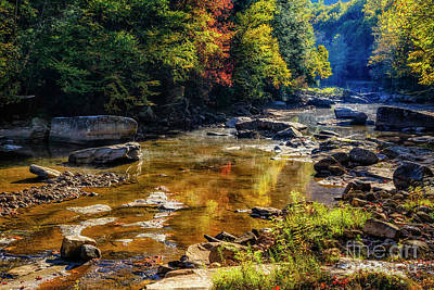Photograph - Morning Along Williams River by Thomas R Fletcher