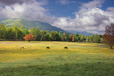 Photograph - Morning At Cade Cove by Mary Almond