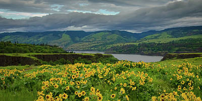Photograph - Spring Burst Along The Columbia by Don Schwartz