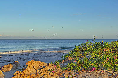Seagull Photograph - Morning At The Beach - Florida Seascape by HH Photography of Florida