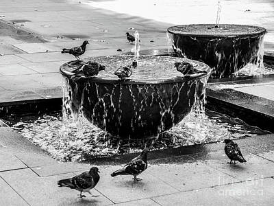Photograph - Morning Bath In Sydney by Lexa Harpell