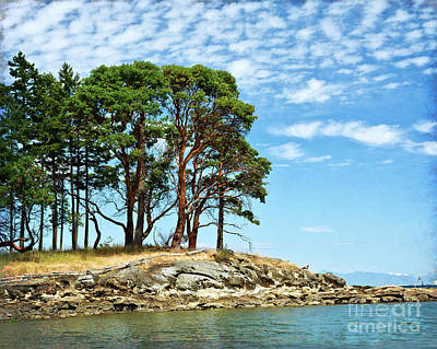 Photograph - Morning Beach Arbutus Trees by Maria Janicki