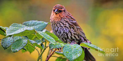 Photograph - Morning Bird by Elizabeth Winter