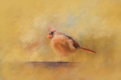 Photograph - Morning Blessing Song Bird Art by Jai Johnson