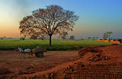 Photograph - Morning Bliss by Awais Yaqub