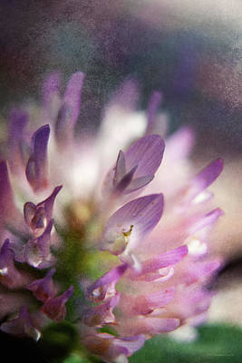 Photograph - Morning Blossom 2 by WB Johnston