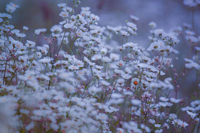 Photograph - Morning Blues  by Bulik Elena