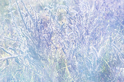 Morning Blues Of Wild Flowers Art Print