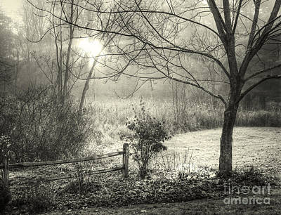 Morning Breaking Art Print by Betsy Zimmerli