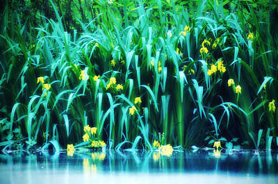 Lilly Pond Digital Art - Morning By The Pond by Bill Cannon