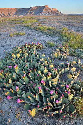 Photograph - Morning Cacti by Ray Mathis