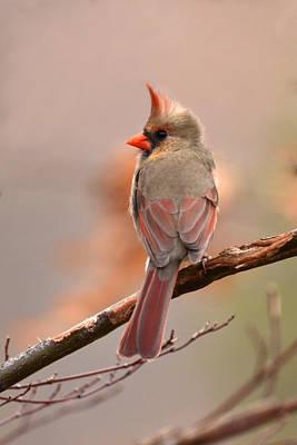 Photograph - Morning Cardinal by Ann Bridges