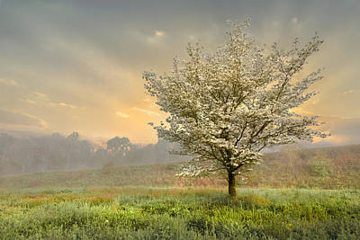 Floral Landscape Photograph - Morning Celebration by Debra and Dave Vanderlaan