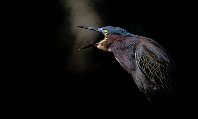 Photograph - Dawn Chorus by Stuart Harrison