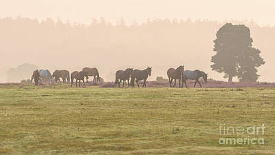 Morning Commute  New Forest Art Print by Richard Thomas