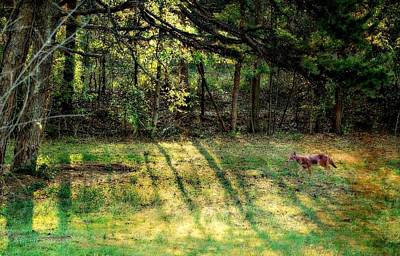 Photograph - Morning Coyote by Kathy Barney