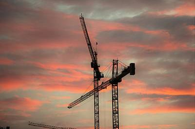 Photograph - Morning Crane by Buddy Scott