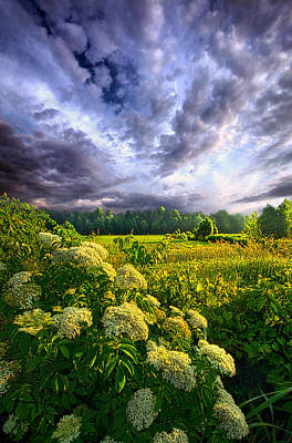 Photograph - Morning Creation by Phil Koch