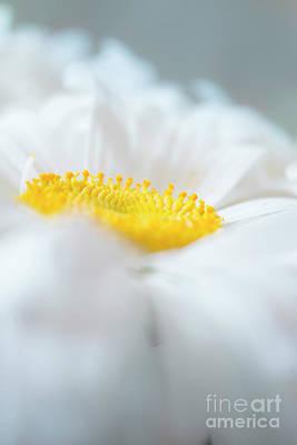 The Sakura Photograph - Morning Daisy  by Irina Effa