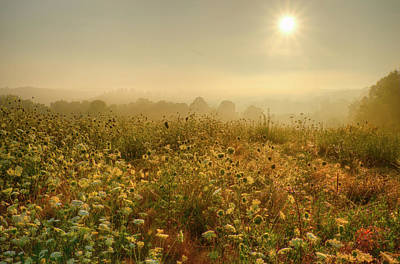Photograph -  Morning Dew At Kendall Hills  by Ann Bridges