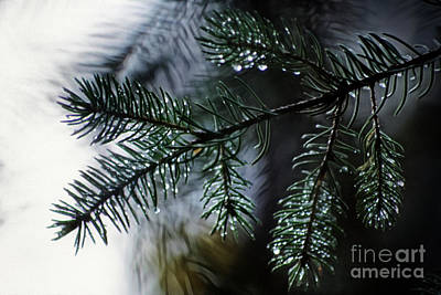 Photograph - Morning Dew by Brad Allen Fine Art