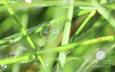 Photograph - Morning Dew Diamonds by Donna L Munro