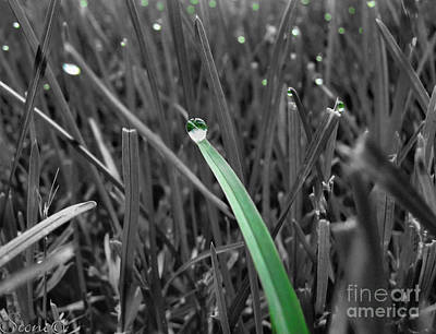 Photograph - Morning Dew  by September  Stone