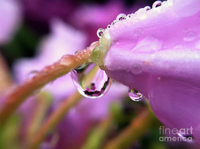 Photograph - Morning Dew by Kerri Farley