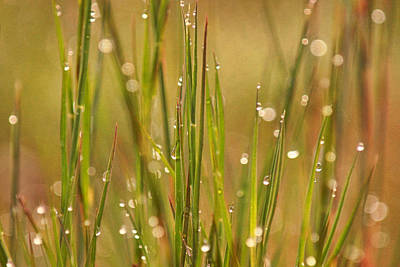 Photograph - Morning Dew by Leda Robertson