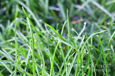 Photograph - Morning Dew On Grass by Donna L Munro