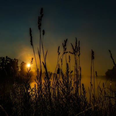 Photograph - Morning Dew On Tall Grass by Chris Bordeleau