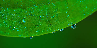 Photograph - Morning Dew by Tim Nichols