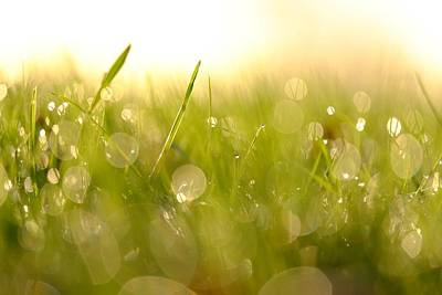 Photograph - Morning Dew by Will Gudgeon