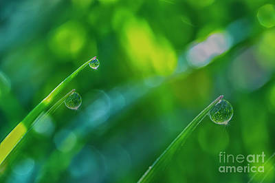 Morning Dewdrops V Art Print