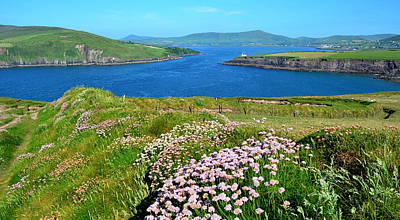 Photograph - Morning Dingle Bay by Barbara Walsh