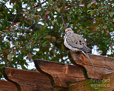Photograph - Morning Dove by Kathy M Krause